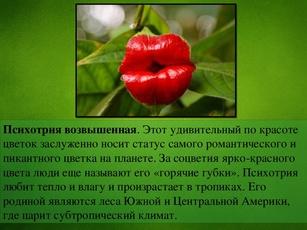 Кровь презентация по биологии 6 класс цветок чибо