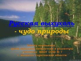 Хохуля или русская выхухоль