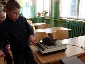 Сколько весит черепаха