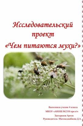 Исследовательский проект «Чем питаются мухи?»
