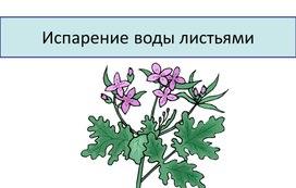 """Урок биологии """"Испарение воды листьями"""""""