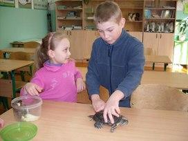 Проводим эксперимент с черепахой