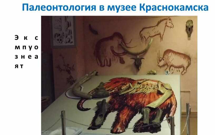 Палеонтология в музее Краснокамска