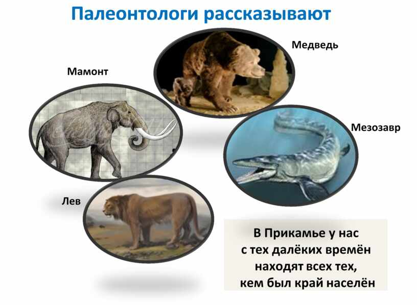 Палеонтологи рассказывают