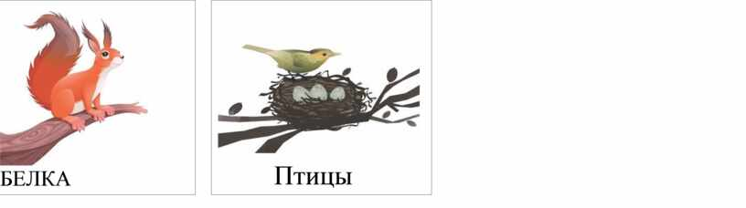 БЕЛКА Птицы