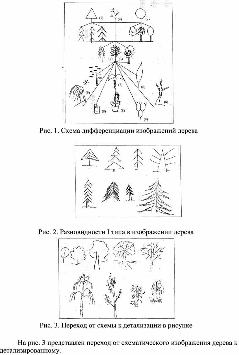 Рис. 1. Схема дифференциации изображений дерева