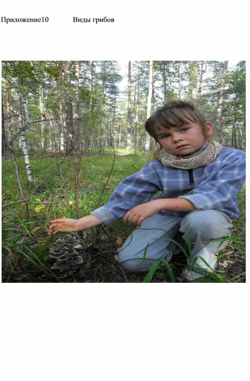 Приложение10 Виды грибов