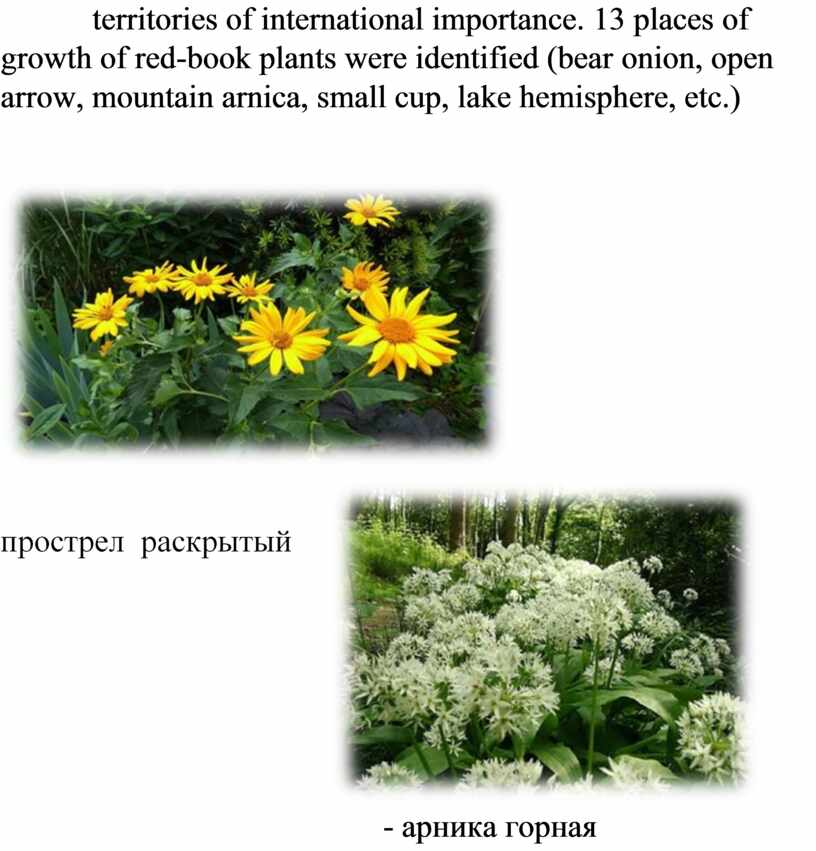 territories of international importance. 13 places of growth of red-book plants were identified (bear onion, open arrow, mountain arnica, small cup, lake hemisphere, etc.) -…