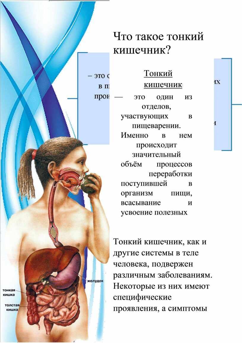 Тонкий анализ кишечник крови приеме при глюкозы крови анализ