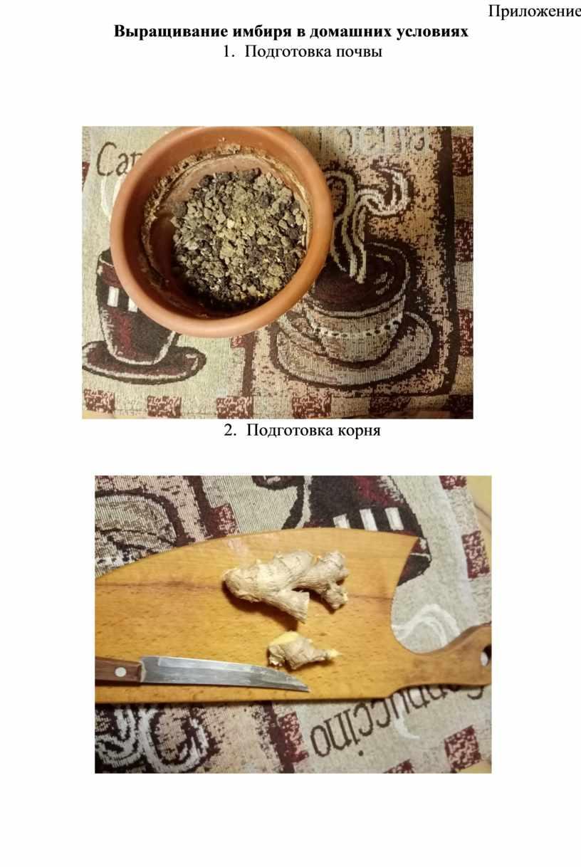 Приложение Выращивание имбиря в домашних условиях 1