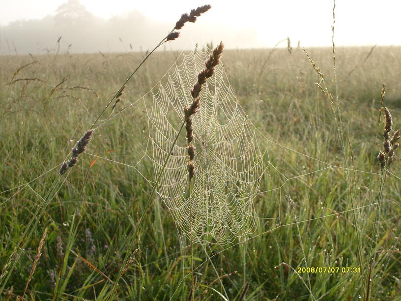 Фотоконкурс «Живая природа Башкортостана