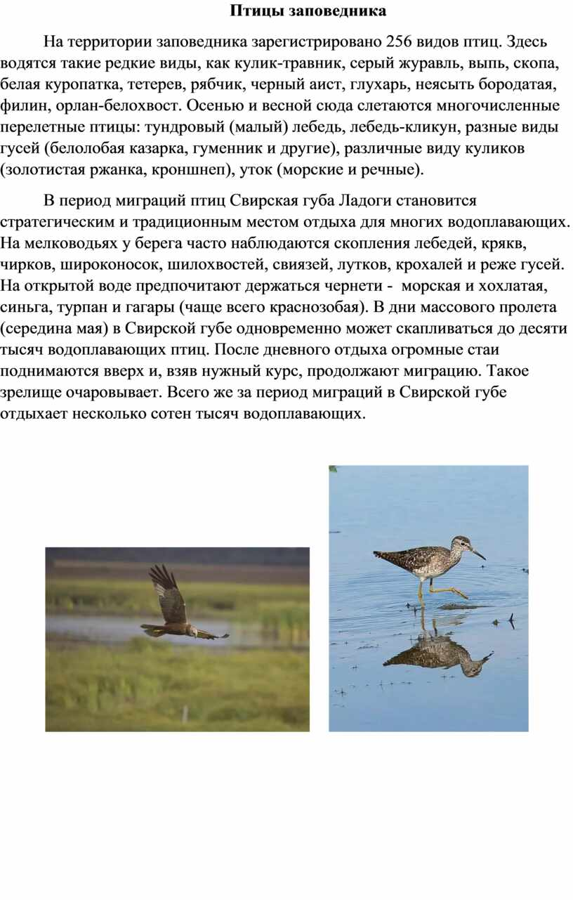 Птицы заповедника На территории заповедника зарегистрировано 256 видов птиц