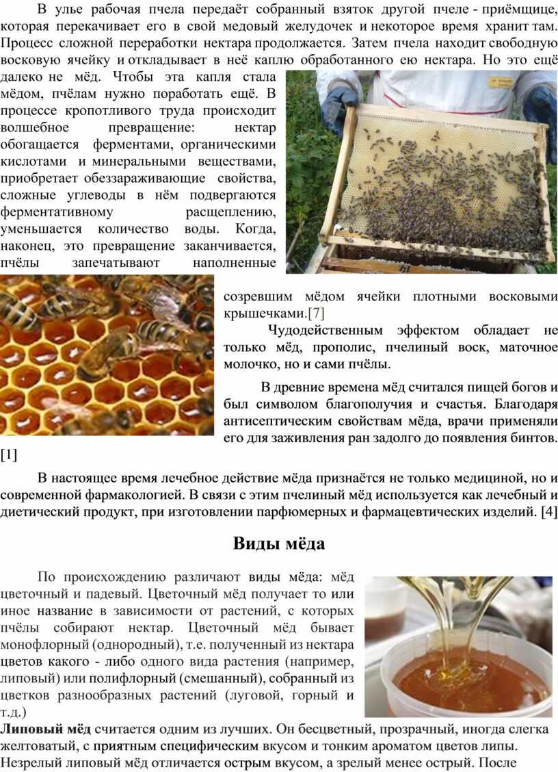 В улье рабочая пчела передаёт собранный взяток другой пчеле - приёмщице, которая перекачивает его в свой медовый желудочек и некоторое время хранит там