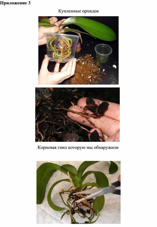 Приложение 3 Купленные орхидеи