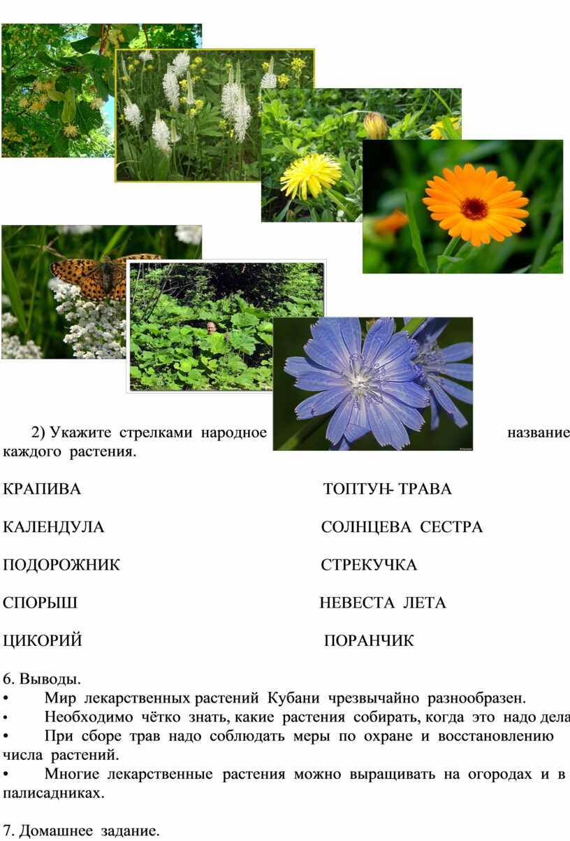 Укажите стрелками народное название каждого растения