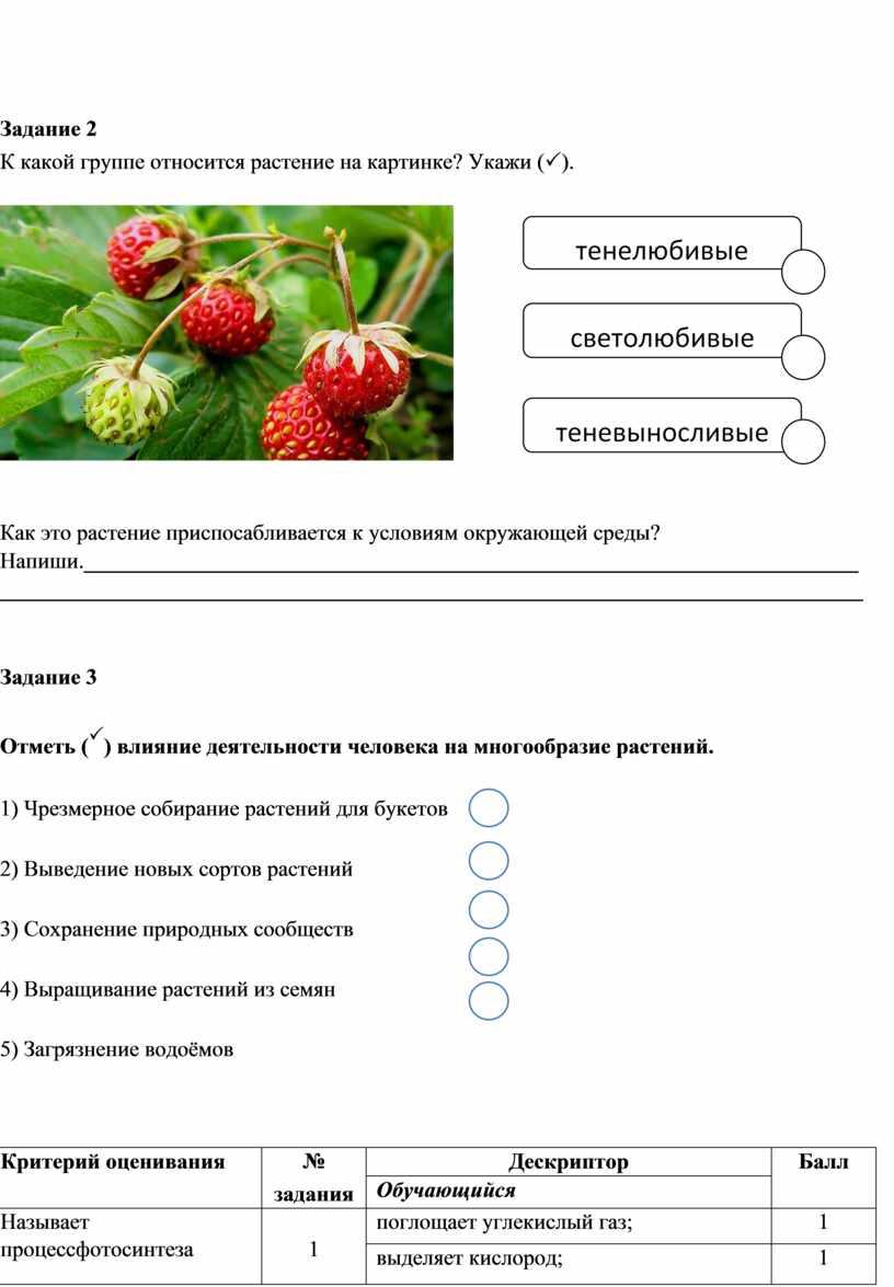 Задание 2 К какой группе относится растение на картинке?