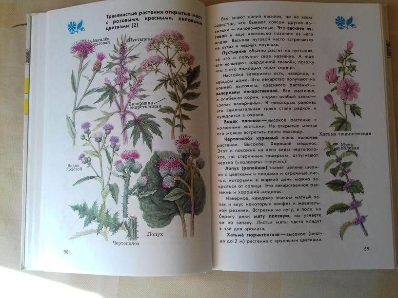 Интересное о растениях