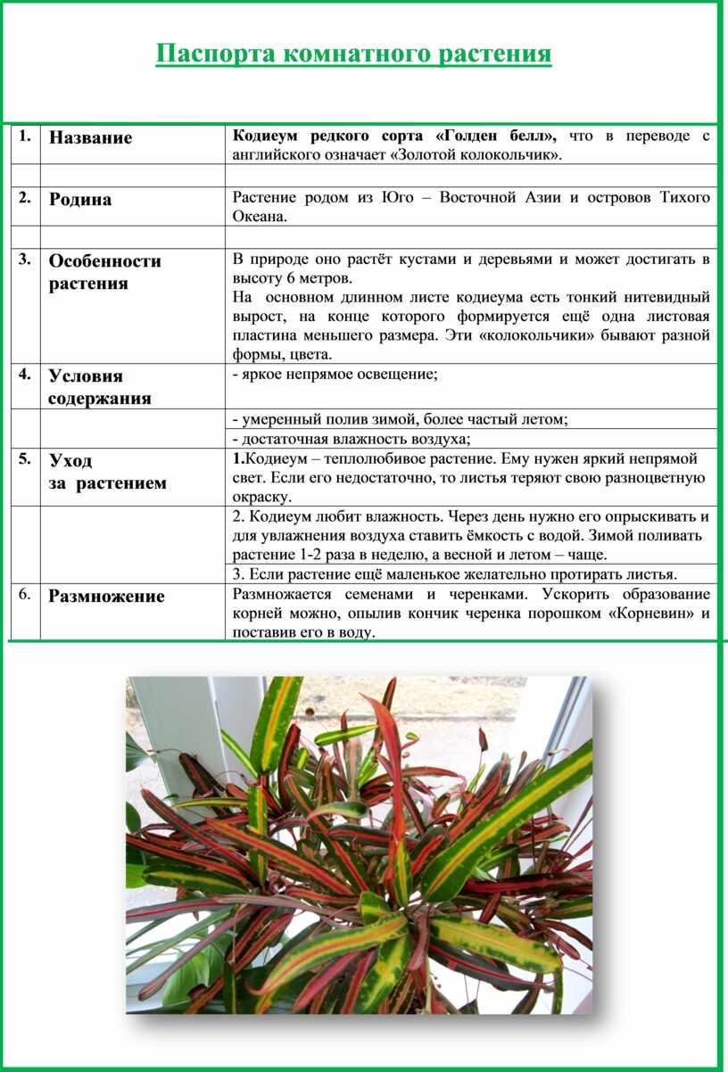 Паспорта комнатного растения 1