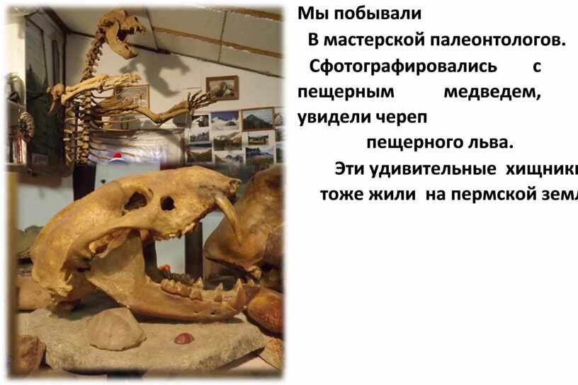 Мы побывали В мастерской палеонтологов