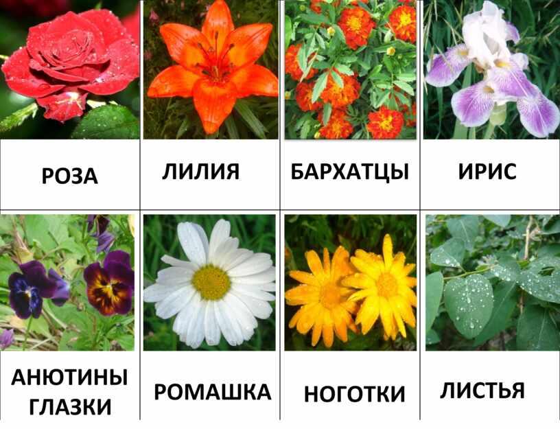 """Мини-лото """"Цветы"""""""