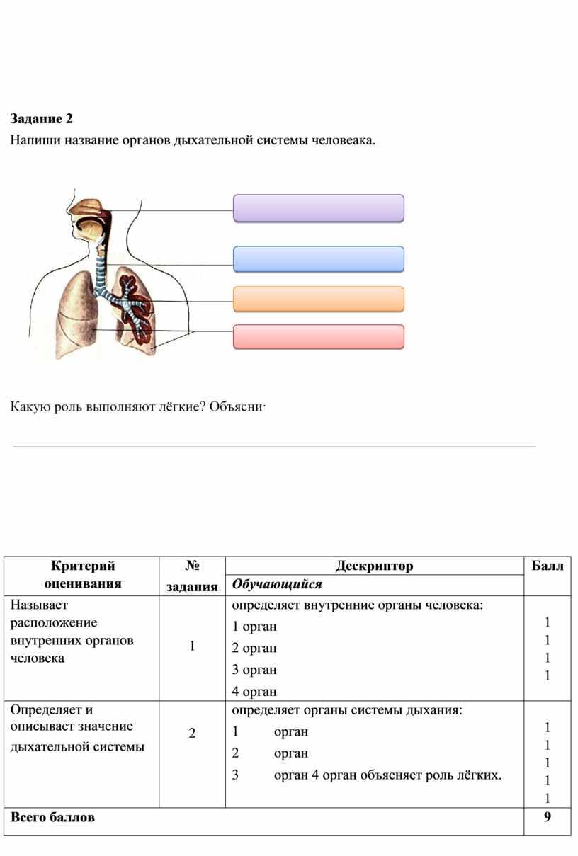 Задание 2 Напиши название органов дыхательной системы человеака
