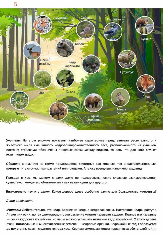 Учитель: На этом рисунке показаны наиболее характерные представители растительного и животного мира смешанного кедрово-широколиственного леса, расположенного на