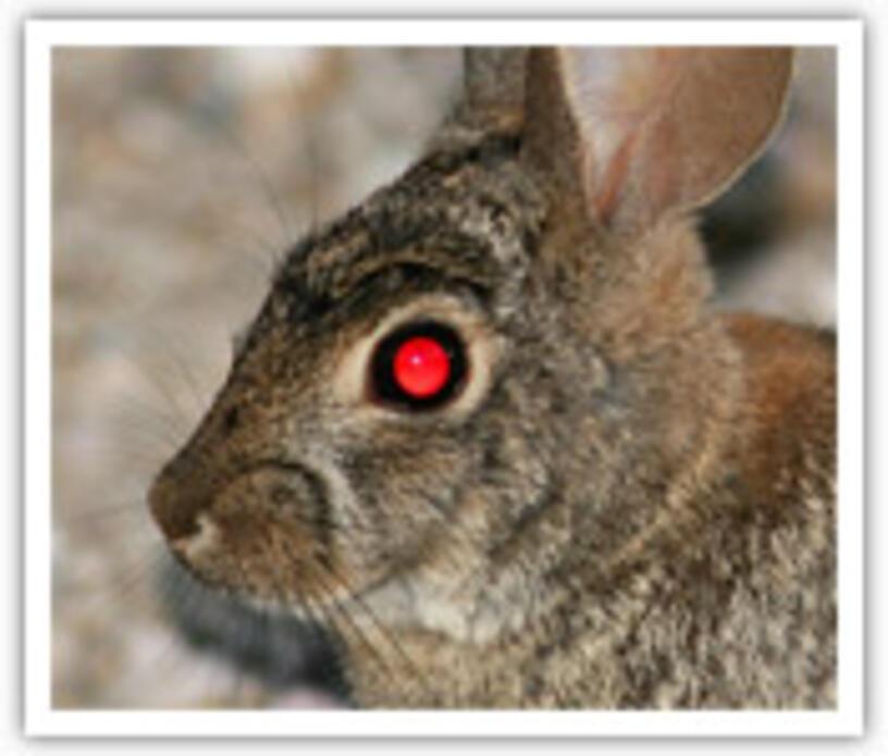 """Урок """"Красные глаза"""" в программе Adobe Photoshop"""