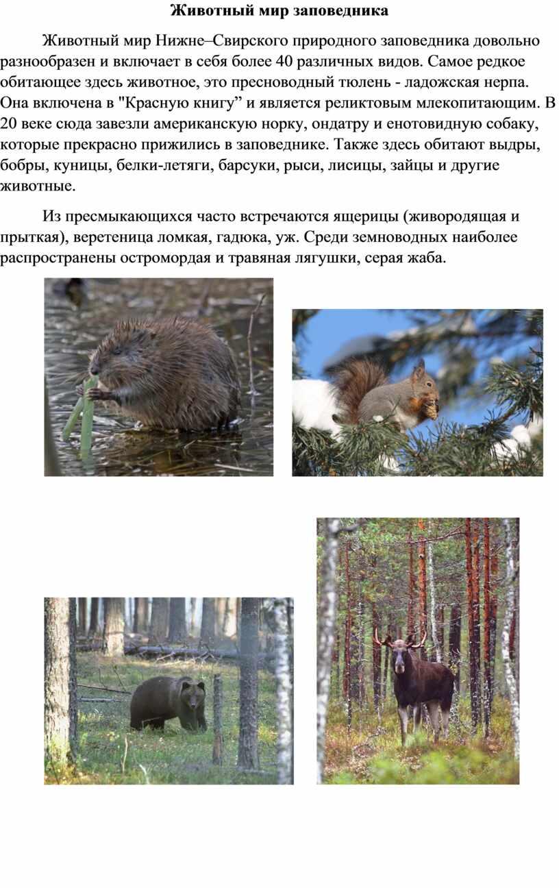 Животный мир заповедника Животный мир