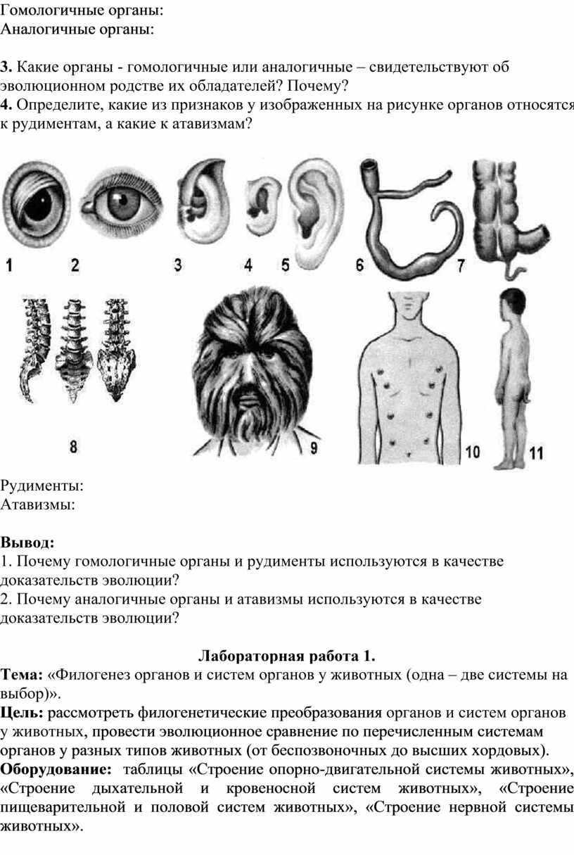 Гомологичные органы: Аналогичные органы: 3