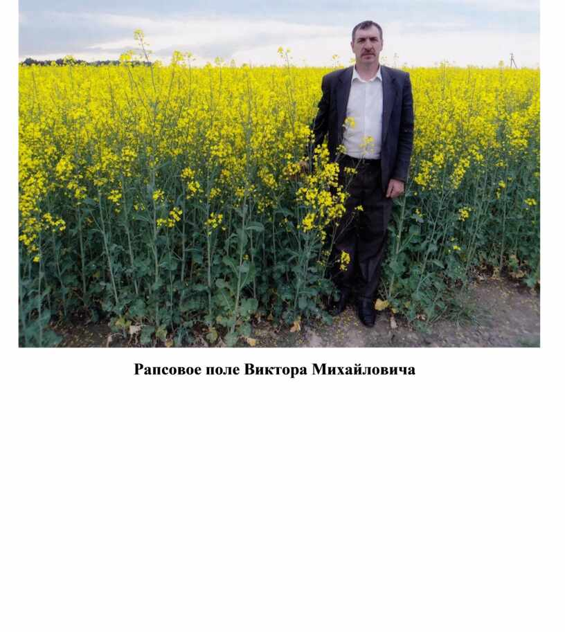 Рапсовое поле Виктора Михайловича