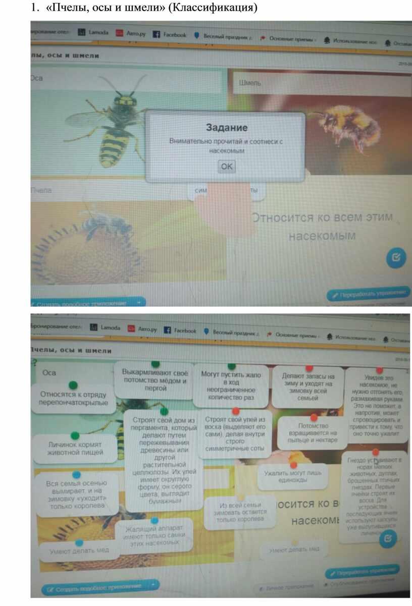 Пчелы, осы и шмели» (Классификация)