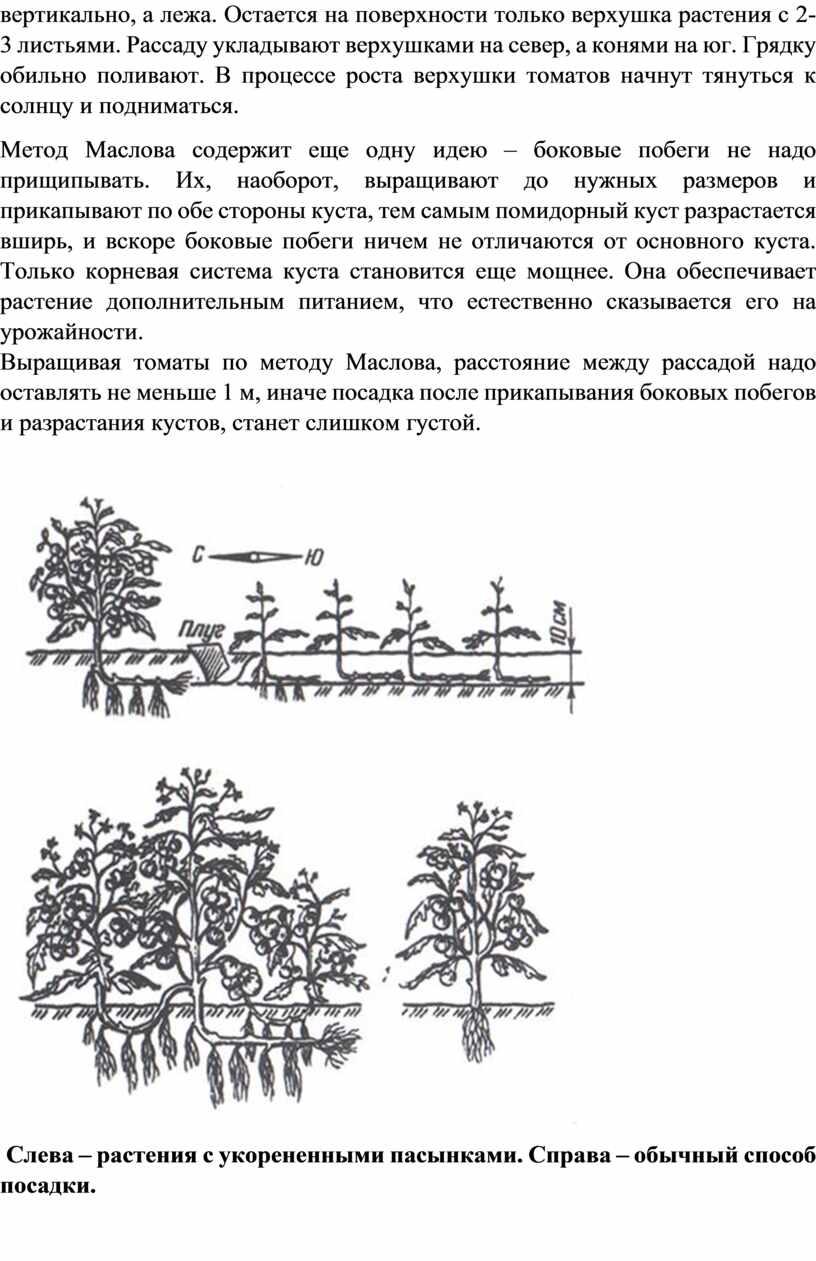 Остается на поверхности только верхушка растения с 2-3 листьями