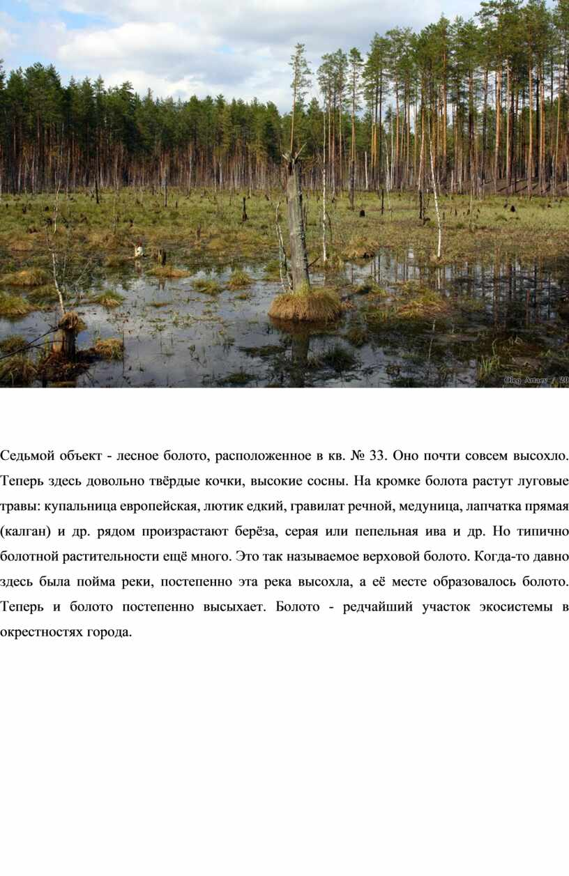 Седьмой объект - лесное болото, расположенное в кв