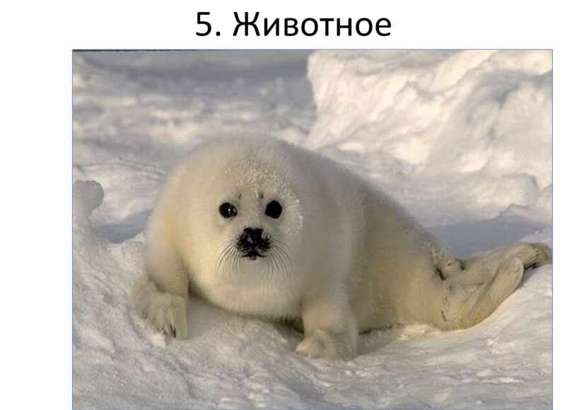 5. Животное