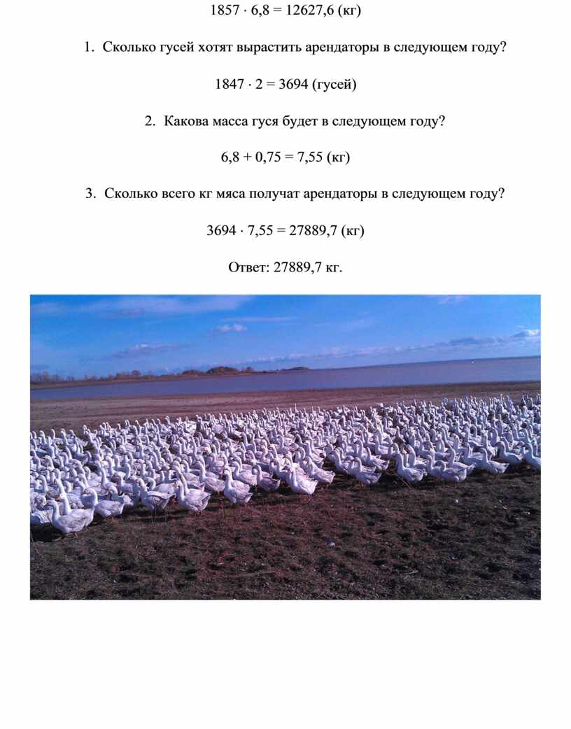 Сколько гусей хотят вырастить арендаторы в следующем году? 1847 × 2 = 3694 (гусей) 2
