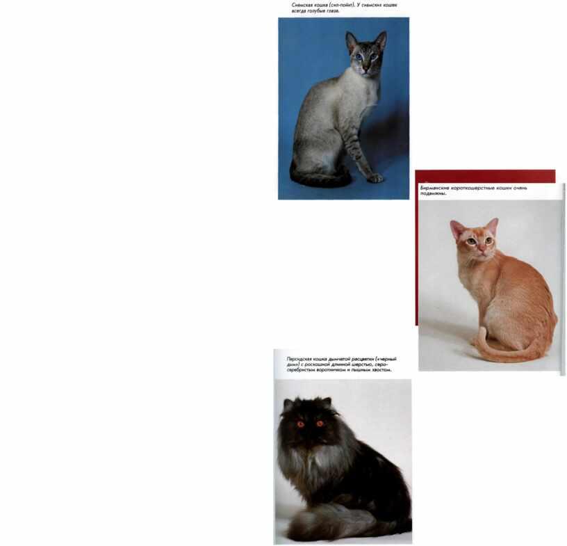 """Исследование """"Загадочные существа - кошки"""""""