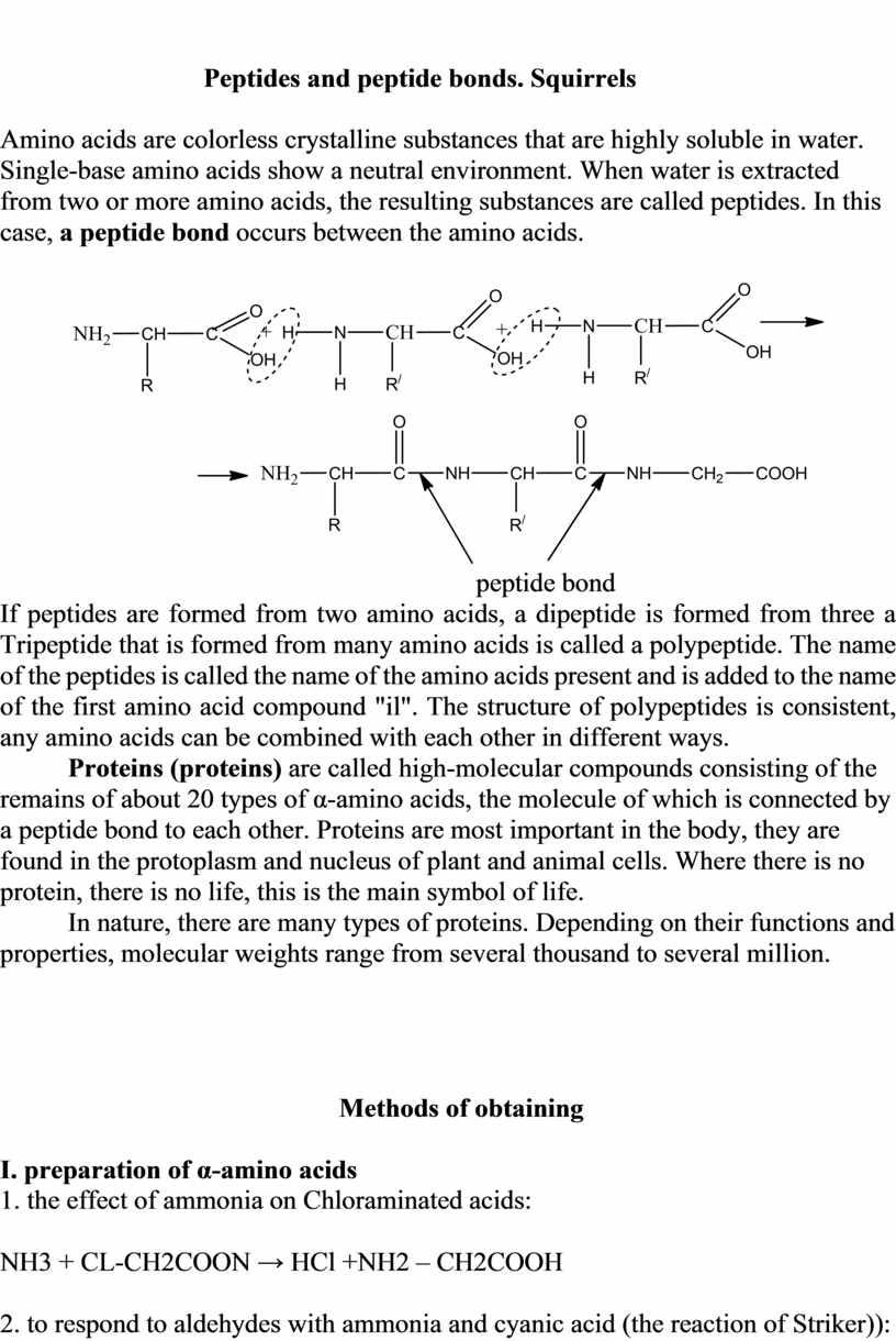 Peptides and peptide bonds. Squirrels