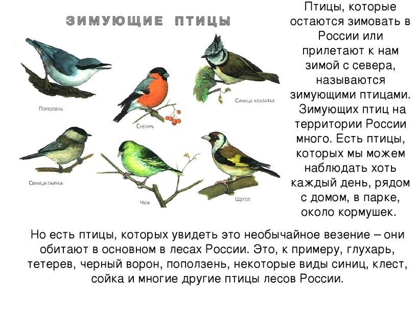 """Альбом """"Зимующие птицы"""""""