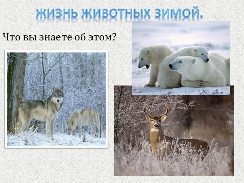 """Презентация """"Зимушка зима"""""""