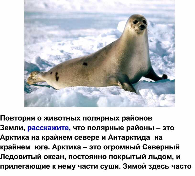 Повторяя о животных полярных районов