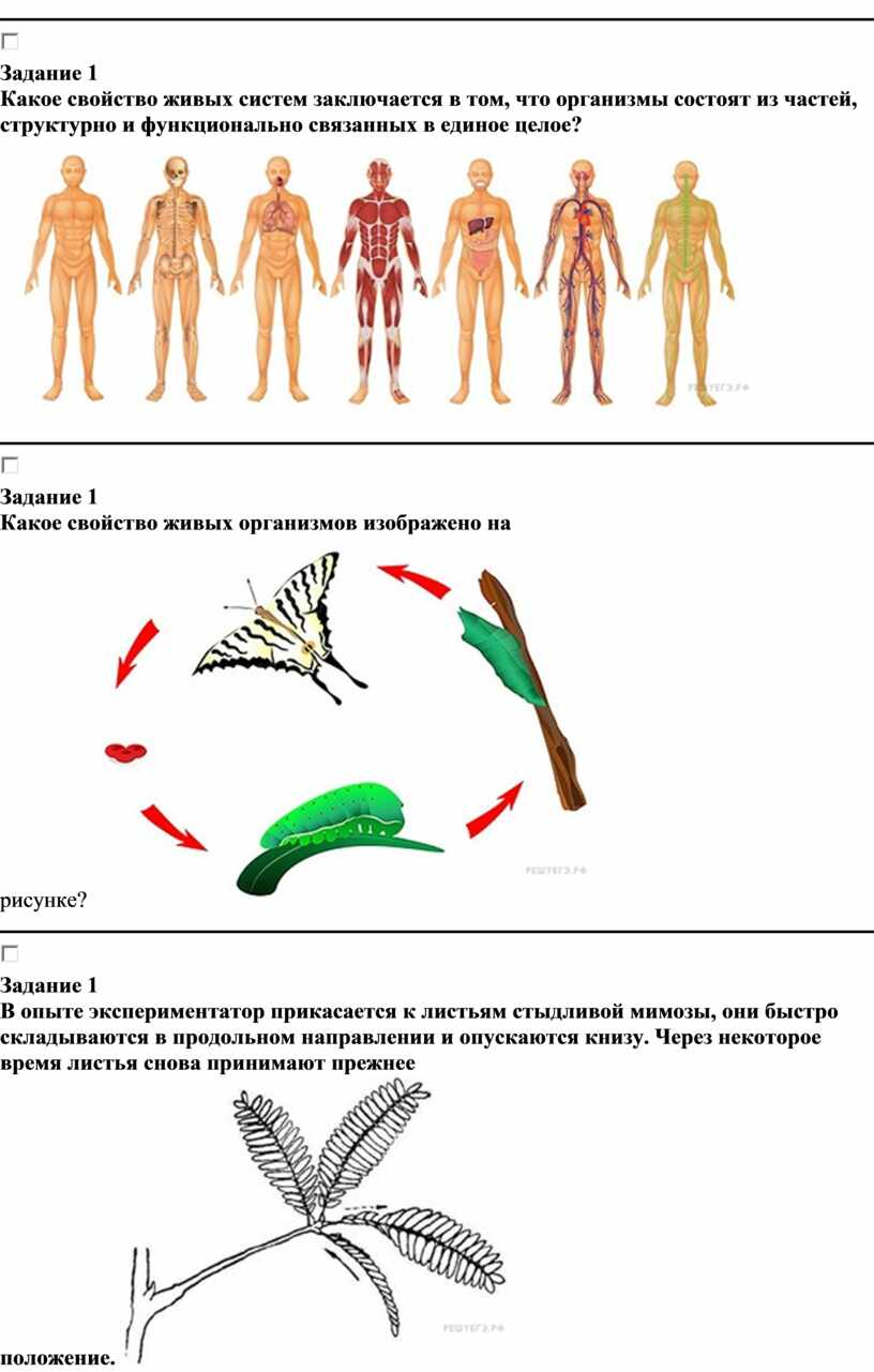 Задание 1 Какое свойство живых систем заключается в том, что организмы состоят из частей, структурно и функционально связанных в единое целое?