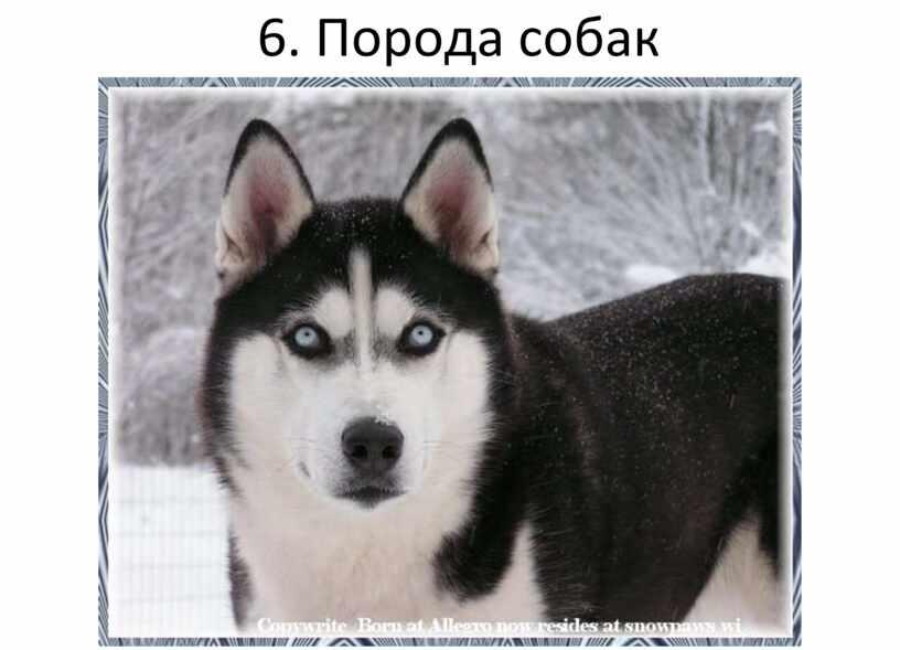 6. Порода собак