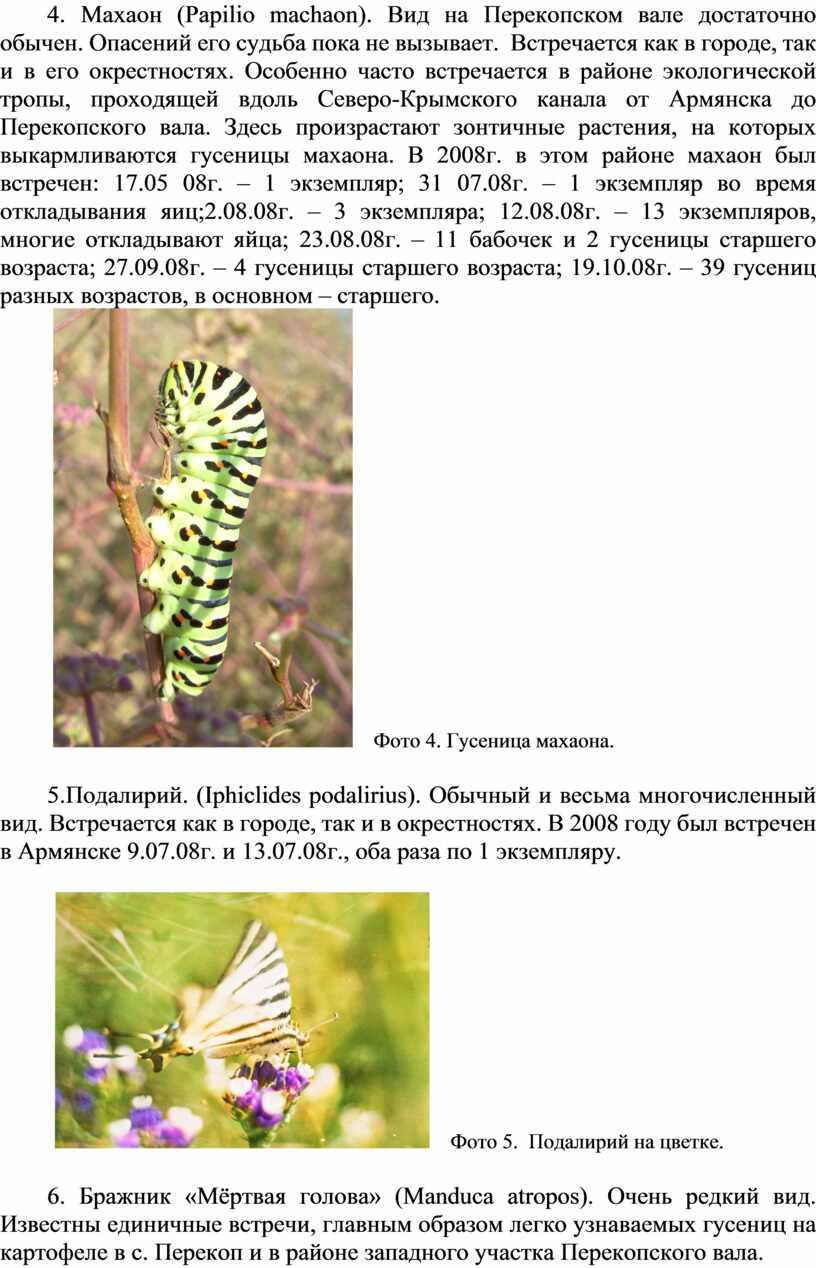 Махаон ( Papilio machaon ). Вид на