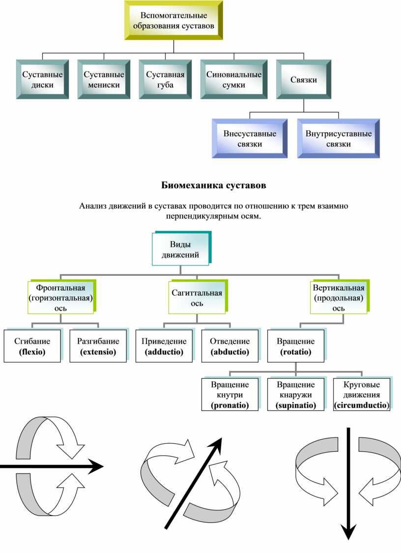 Биомеханика суставов Анализ движений в суставах проводится по отношению к трем взаимно перпендикулярным осям