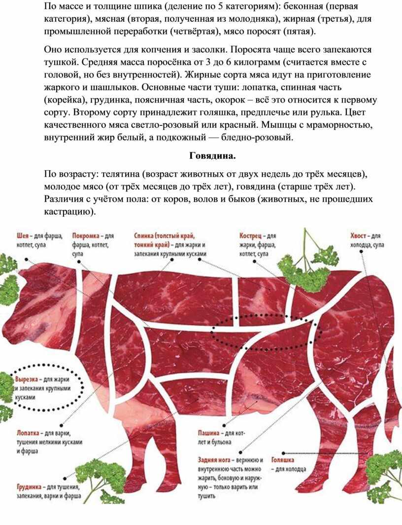 По массе и толщине шпика (деление по 5 категориям): беконная (первая категория), мясная (вторая, полученная из молодняка), жирная (третья), для промышленной переработки (четвёртая), мясо поросят…