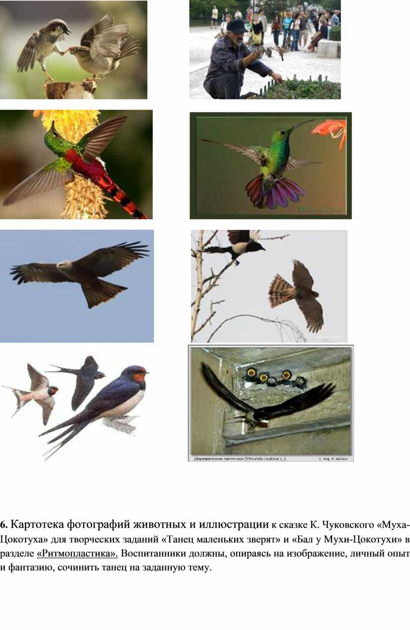 Картотека фотографий животных и иллюстрации к сказке