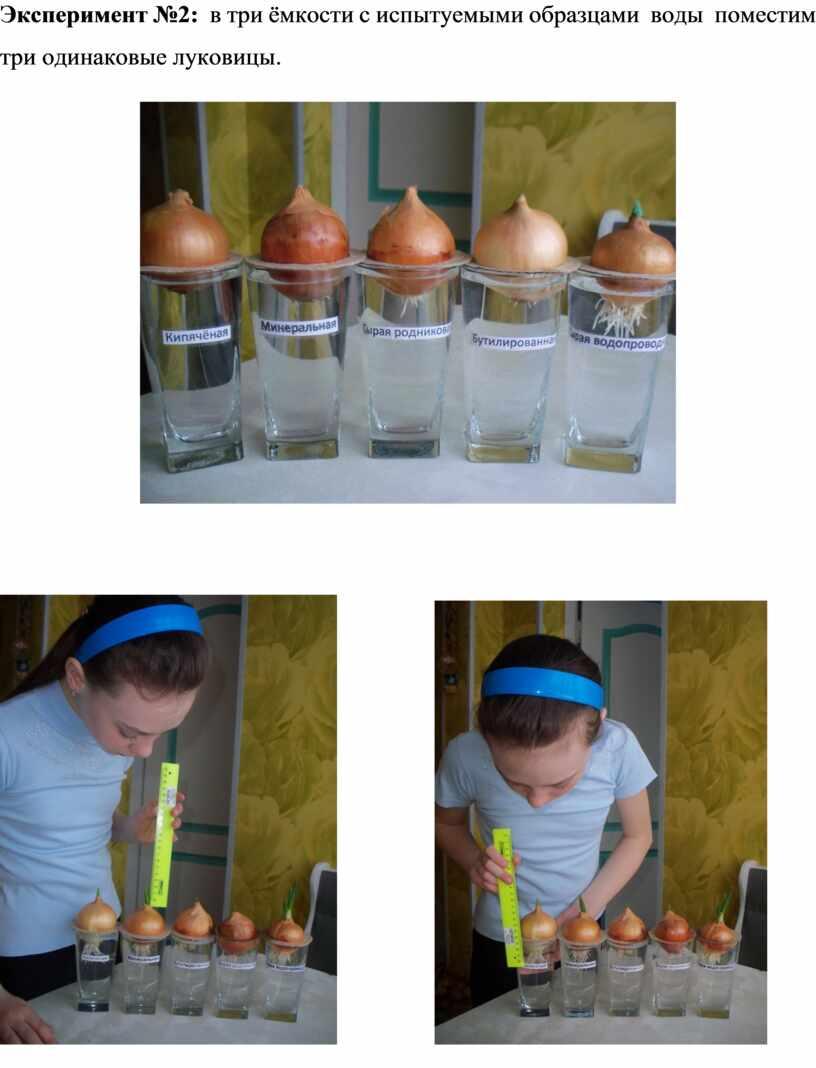 Эксперимент №2: в три ёмкости с испытуемыми образцами воды поместим три одинаковые луковицы