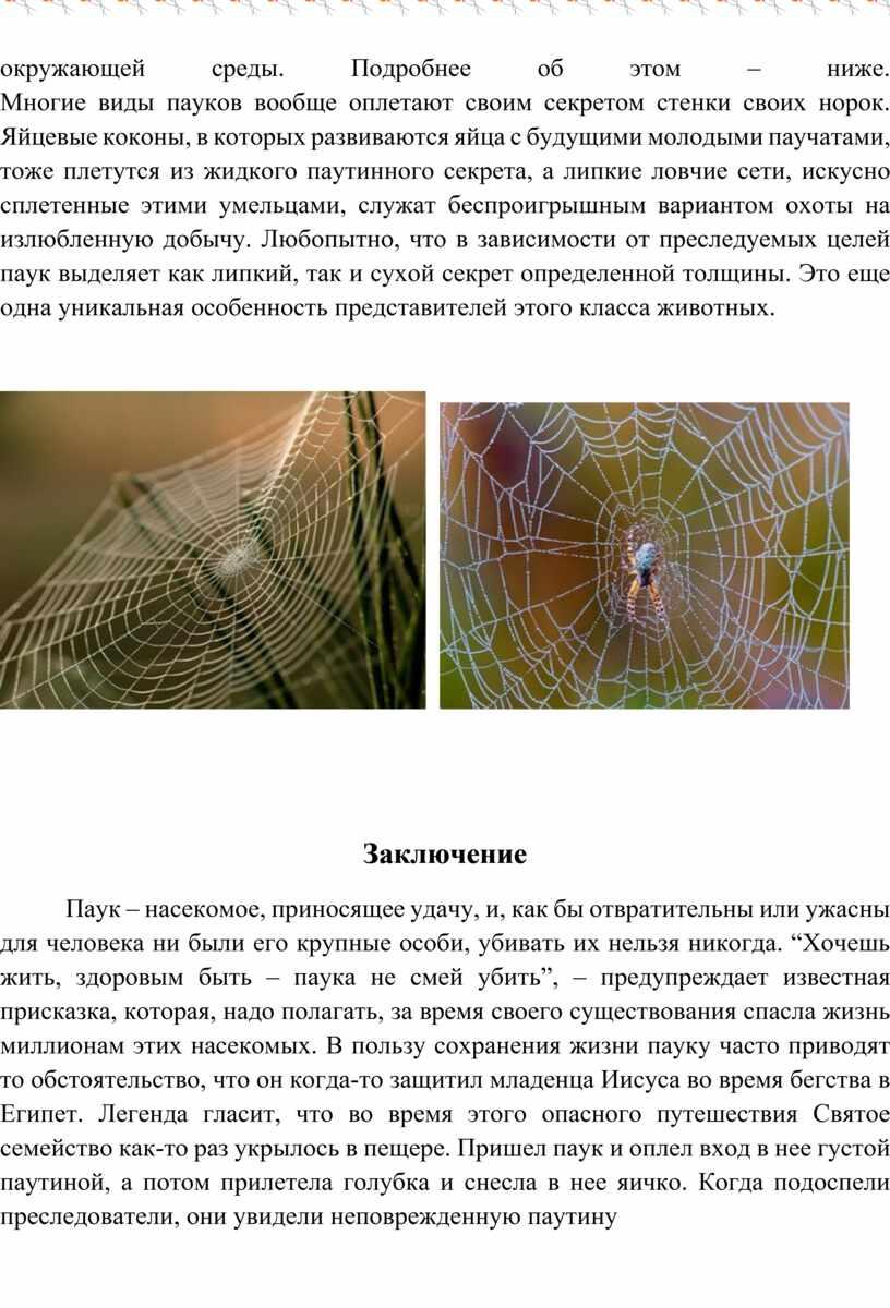 Подробнее об этом – ниже. Многие виды пауков вообще оплетают своим секретом стенки своих норок
