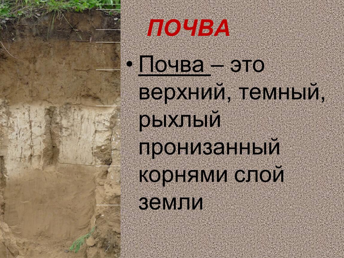 ПОЧВА Почва – это верхний, темный, рыхлый пронизанный корнями слой земли