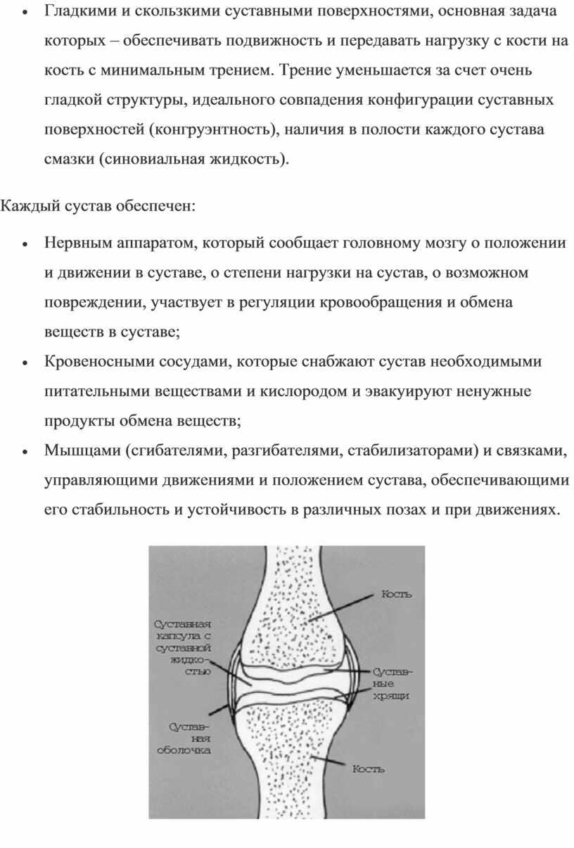 Гладкими и скользкими суставными поверхностями, основная задача которых – обеспечивать подвижность и передавать нагрузку с кости на кость с минимальным трением